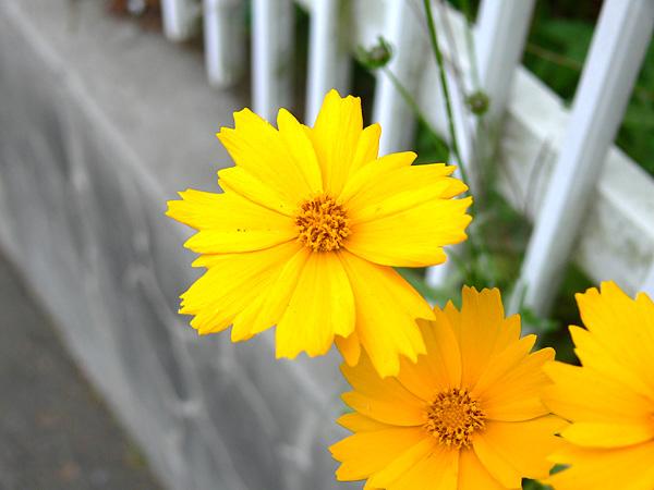 その辺に咲いてた花