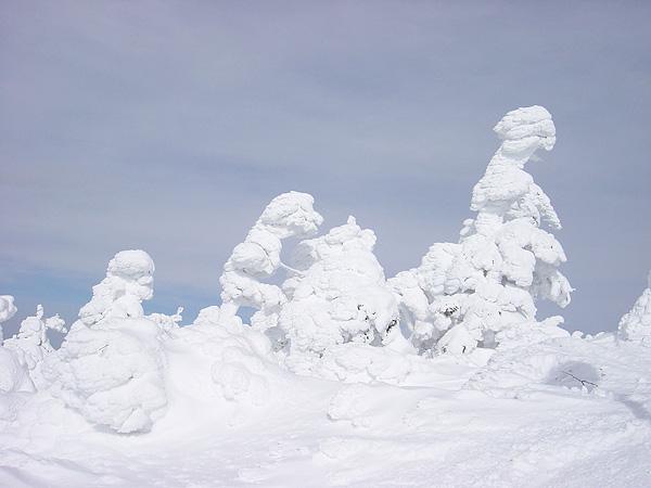 山形蔵王温泉スキー場 樹氷を望む